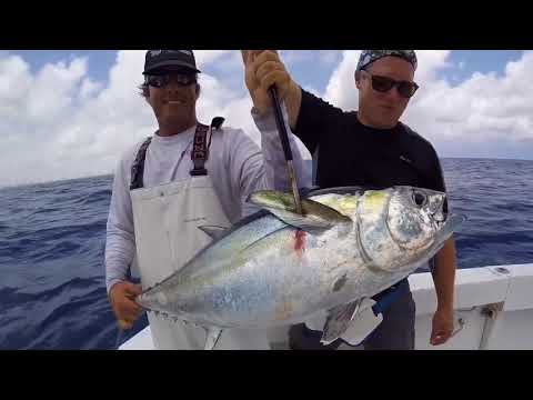 Top Gun Fishing Charters Highlights