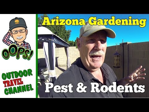 arizona-garden-pest-&-rodents,-how-to-prevent,-arizona-living-with-rob