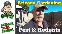 Arizona Garden Pest & Rodents, How To Prevent, Arizona Living with Rob
