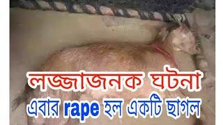 pregnant goat raped!!8 men raped haryana