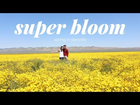 Carrizo Plain National Monument Super Bloom 2017 | Come with Us! VLOG