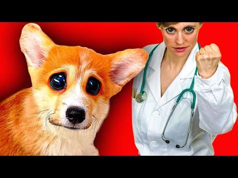 ЩЕНОК КОРГИ ПОПАЛ В БОЛЬНИЦУ!! (Корги Коржик) Говорящая собака