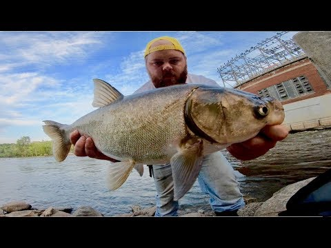 ENDLESS Indiana River Asian Carp Fishing!!!! (Flying Fish)