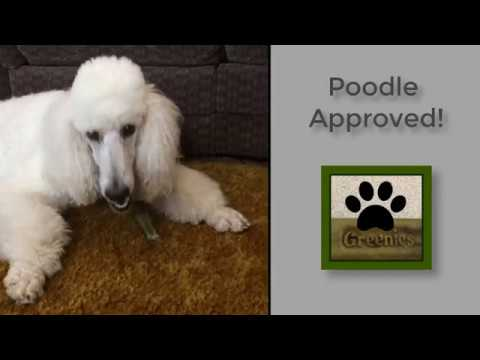 Greenies for Dogs Review | Standard Poodle Owner