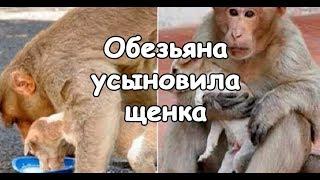 Обезьяна усыновила бездомного щенка | Актуально
