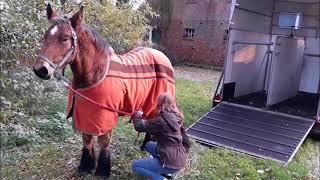 Pferdemarkt Zuidlaren | Fohlenrettung