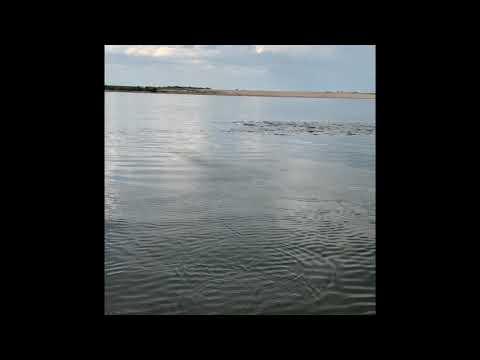 30 lbs jacks love poppers. fly fishing Savannah