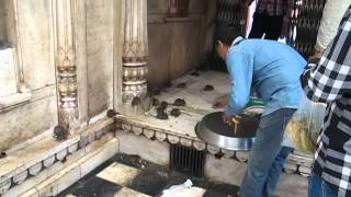 Tempio dei topi - Karni Mata Temple