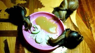 Ужин улиток|| Все мои животные||