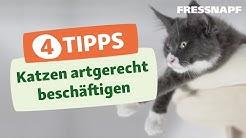 4 Tipps zum Beschäftigen von Katzen | Spielen & Trainieren