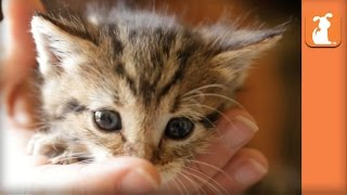 The Most Magically Cute Kitten You'll See All Day  Kitten Love