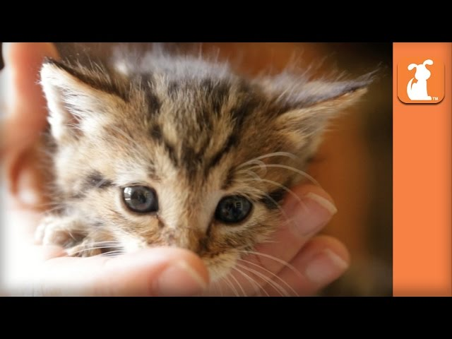 The Most Magically Cute Kitten You'll See All Day - Kitten Love