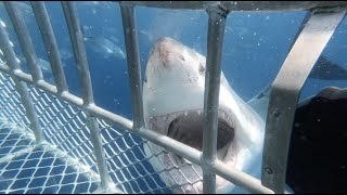 Shark cage diving - 17th January 2021