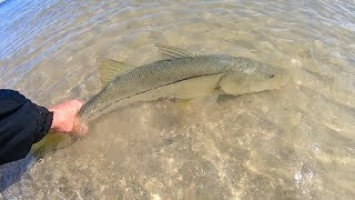 How to catch Snook and Trout (beach fishing florida)