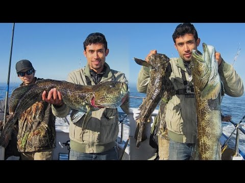 HUGE CABEZON And The JACKPOT Lingcod.  Everyone Get Their Limits Here!!!