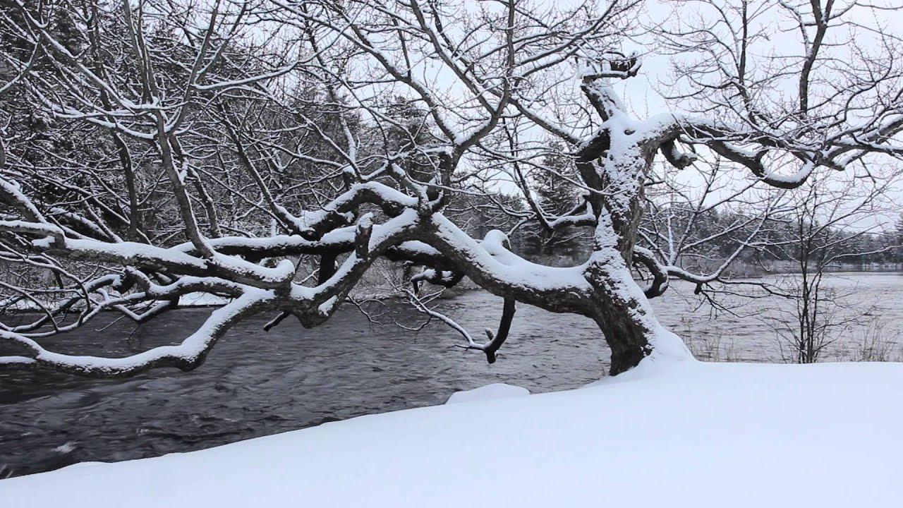 Winter Tree | Snowfall Winter Tree And River Flowing 1 Hr Soundscape Relaxing