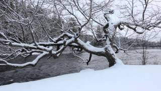 Snowfall, Winter Tree and River Flowing - 1 hr Soundscape, Relaxing, Peaceful