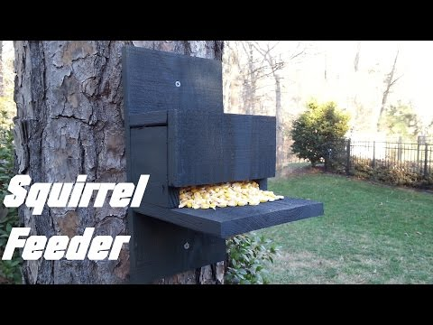 Homemade Squirrel Feeder