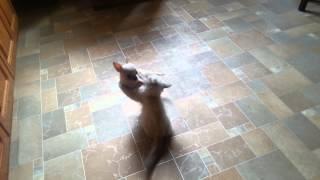 Щенок и котенок игры