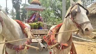 Woman's Horse Cart Riding || महिला की घोड़ा गाड़ी सवारी।