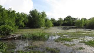 Soundscapes from Bayou Black Lake National Wildlife Refuge