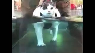 Кот идет в воде