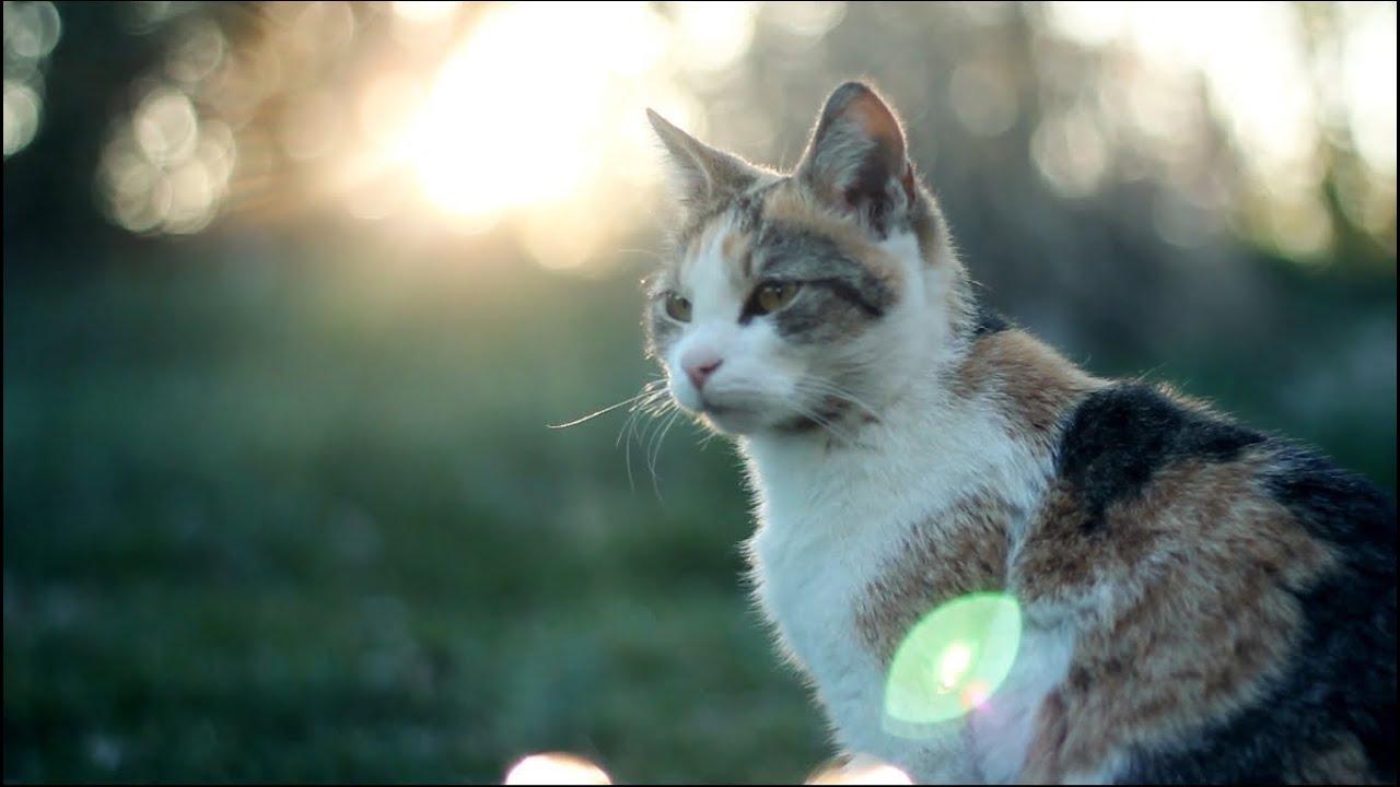 Cats In Hd Iii Youtube
