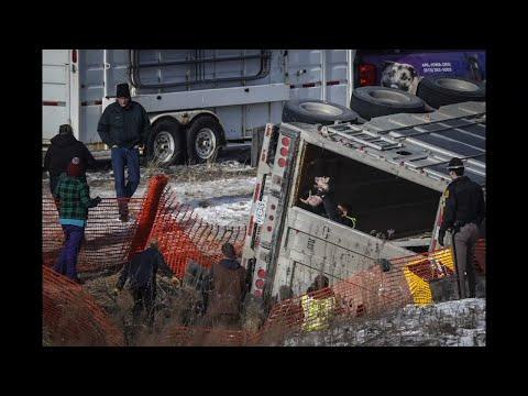 Piglets Rescued After Iowa Truck Crash