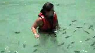 【1200万回再生】小魚に囲まれる美女を襲った悲劇とは?