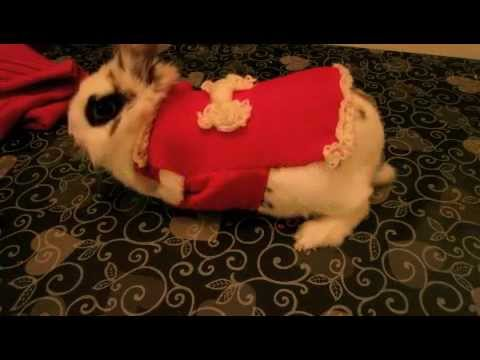 DIY clothes for all pets