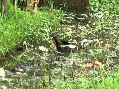 CRTV Interview: Potable Water in Santchou, Cameroon