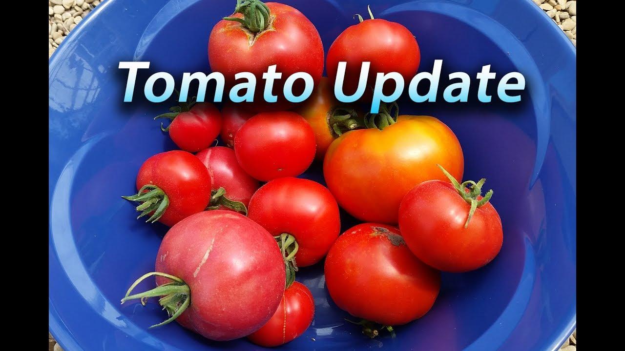 backyard hydroponics tomato update june 2017 youtube