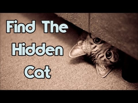 Can You Find The Hidden Cat? 90% Will Fail!