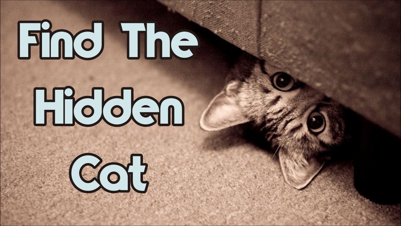 optical illusions find cat # 33