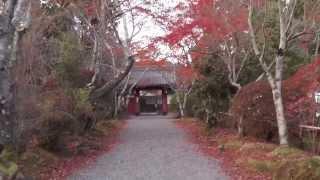 常照寺 その1 吉野門 京都の紅葉名所 Josho-ji Temple autumn leaves attractions in Kyoto part.1