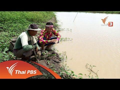 วิถีทั่วไทย : อาหารพื้นบ้านจากปลาไหล อ.แม่จัน จ.เชียงราย (22 ก.ค. 59)