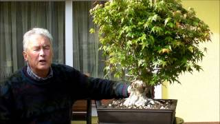 INTERNATIONAL BONSAI ACADEMY with Walter Pall - Episode II - Acer palmatum, drastic cut back
