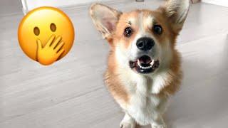 КАКИЕ КОТИКИ ты чего Пробежка с собаками VLOG
