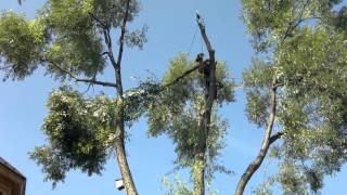 ПРОМТЕХАЛЬП - PROMTEHALP LLC - удаление деревьев альпинистами, профессиональная арбористика в Москве(Строительно-монтажная компания ООО ПРОМТЕХАЛЬП -PROMTEHALP LLC. Профессионально производим высотное удаление..., 2015-09-05T13:34:15.000Z)