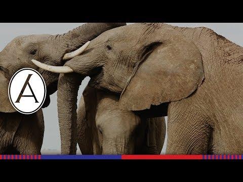Gentle Elephants Play
