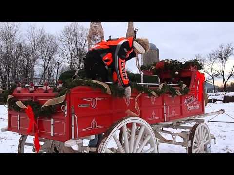 Harding Horse  Christmas Parade -Brainerd, MN-