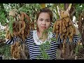 Awesome Mix Tamarind With Chili Recipe-Tamarind Fruits Recipe-Village Food Factory-Traditional Food