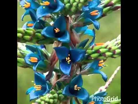 As Flores Mais Lindas Que Eu Ja Vi Na Natureza By Aurea Oliveira