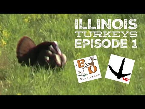 Episode 1: Illinois Turkeys