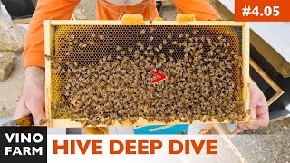 Baixar Spring Hive Decisions - Reversing? Feeding? Supering? Single or Double Brood Boxes?