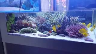 L'acquario di Guido