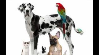 Tallahassee Pet Connect - Pet-related Services And Resources