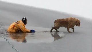 Golden Retriever Rescued From Frozen Maine Lake: Breaking News