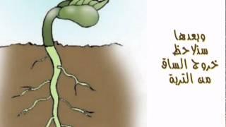 فيديو   نمو النبات ~