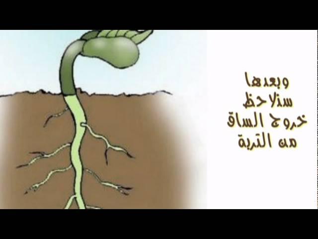 فيديو نمو النبات Youtube